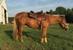 2012 Gelding by Chocolate Chic Olena