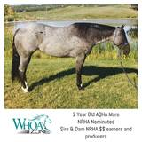 2015 TRUE Blue Roan Mare by NRHA $$ Earners - If you are looking for a unicorn her she is!