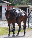 4 Year Old Whizkey N Diamonds Gelding