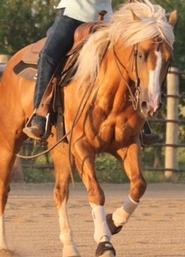 SOLD Stallion with 3 Years Professional Reining Training