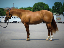 Futurity Horse by Magnum Chic Dream