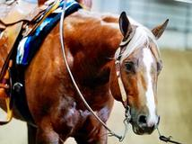 3 Year Old Stallion by Gee Whiz It Shines - Fancy & On Track for Futurity Season