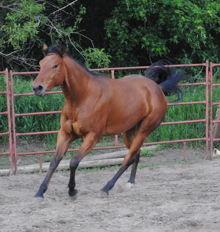 SOLD Mare by Einsteins Revolution