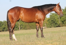WimpyneedsacocKtail two year old gelding
