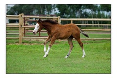 Beautiful High Roller Whiz Weanling