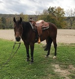 2012 Gelding Perfect for Rookie or Green Reiner