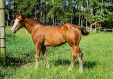 ReinersWorld com, Your Link to the World of Reining  We have
