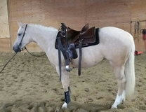 Pale Face Dunnit Palomino filly for sale