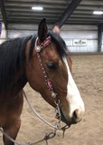 6 yr old reining prospect