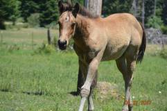 EXCEPTIONAL PROSPECT, HOLLYWOOD DUN IT ON HER PAPERS, AQHA/FQHA/ABRA