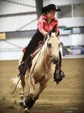 Flashy gelding - Ready to Show - Rookie, Green or Youth