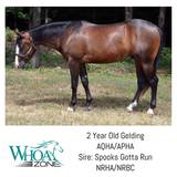 Fancy 2015 AQHA/APHA Gelding by Spooks Gotta Run