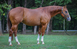 Shine Gun Shine, 3 year old futurity stallion by Shine Chic Shine and out of Gunners Miss Oak