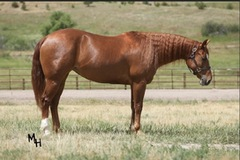 Beautiful Derby Age Mare