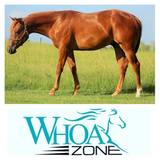 2016 AQHA Stallion by SG Frozen Enterprize x CC The Dirty Dun it