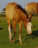 Dun Splash filly by Spook N Dunit and out of a NRHA earning daughter of Wimpys Little Step