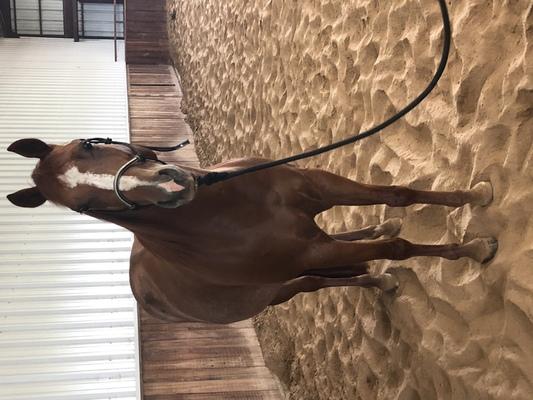 Finished Reining Gelding Reining Horse Reining Horses